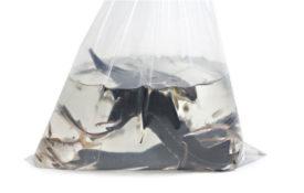 Перевозка / транспортировка живой рыбы